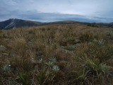 1000 Acre Plateau