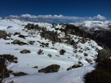 Snowies-11