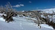 Snowies-14