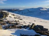 Snowies-3