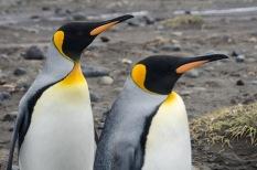 HI Penguins-2002