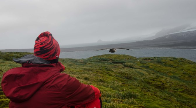 A morning walk on Heard Island