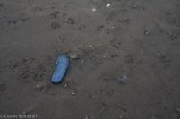HI_Marine_Debris-2447
