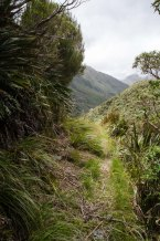The West Coast track team cut this track as they surveyed a route to me with the team coming West from Canturbury