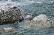 Blue Ducks on the Styx River