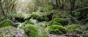 Moss covered rocks on the walk out along the Styx River