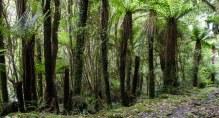 The lush green of a NZ West Coast Bush