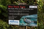 This is an awesome partnership that we were able to see the benefits of when we came across the family of 9 Blue Duck on the Styx River